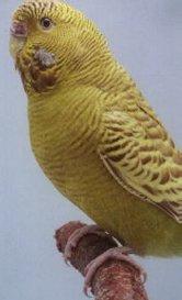 Are these birds real?-weirdbird.jpg