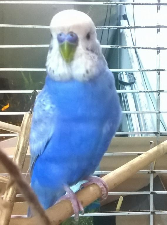 New bird - need help finding out exact color-wp_20141209_21_56_11_pro.jpg