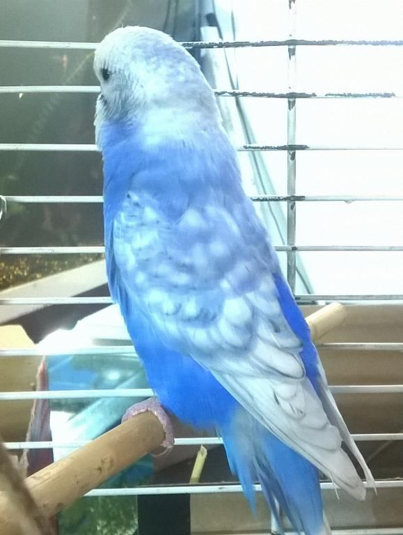 New bird - need help finding out exact color-wp_20141209_21_56_21_pro.jpg
