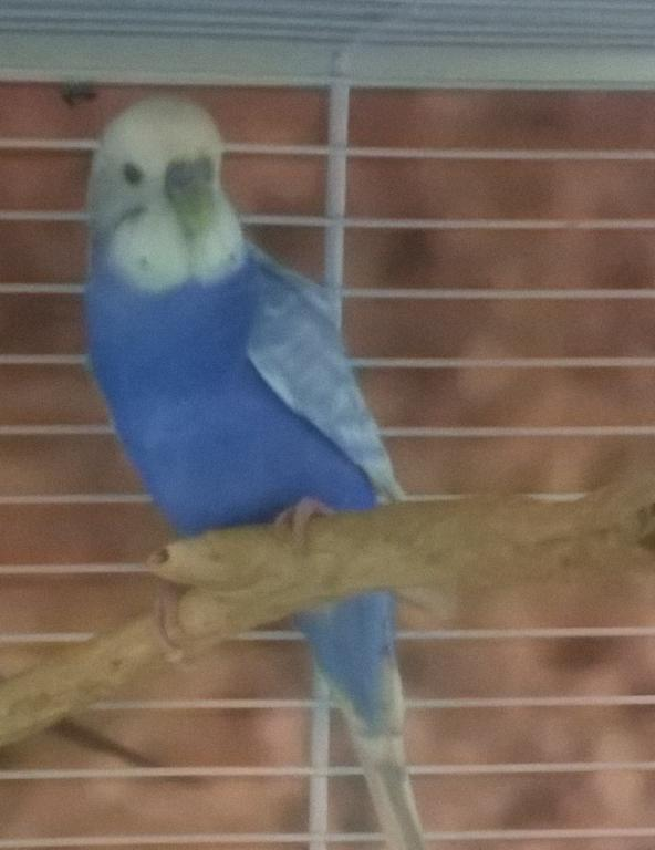 New bird - need help finding out exact color-wp_20141214_20_26_39_pro.jpg