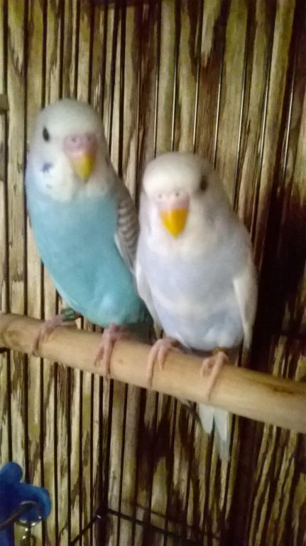 My new babies-wp_20150419_08_47_37_pro.jpg