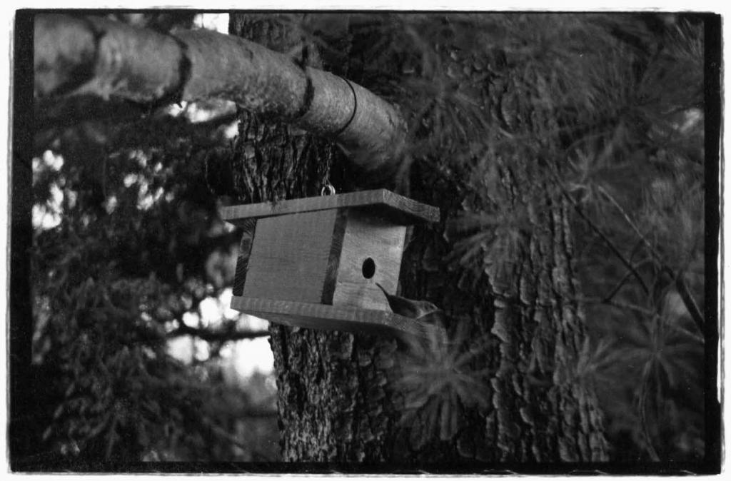 Bird Photos!-wren.jpg