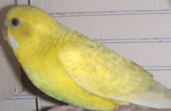 What mutation?-yellow-2.jpg