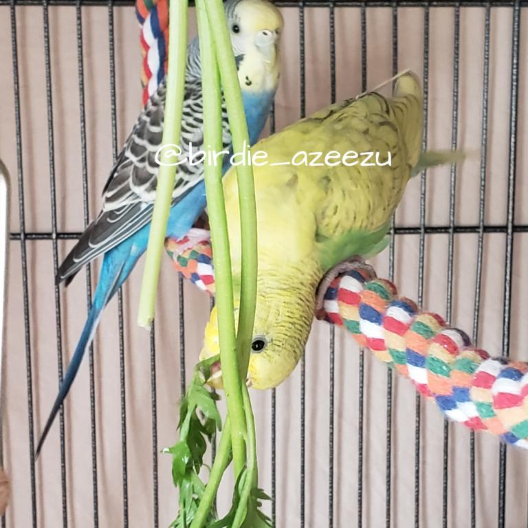 Birdie & Azeezu-yummy-carrot-tops.jpg