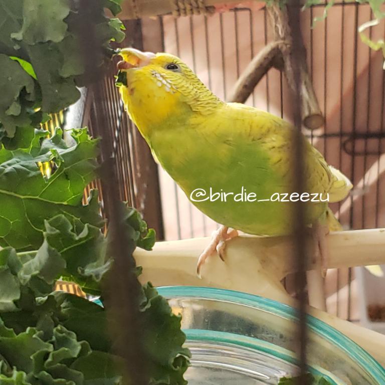Birdie & Azeezu-yummy-kale.jpg