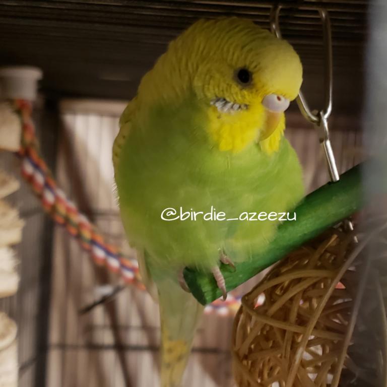 Birdie & Azeezu-zeezus-fav-toy.jpg