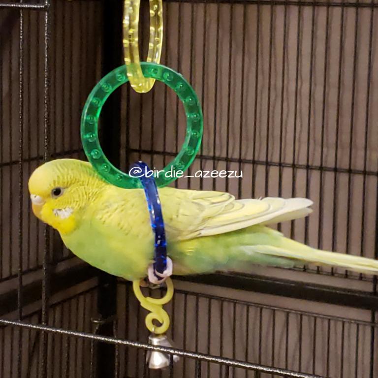 Birdie & Azeezu-zeezus-other-fav-toy.jpg
