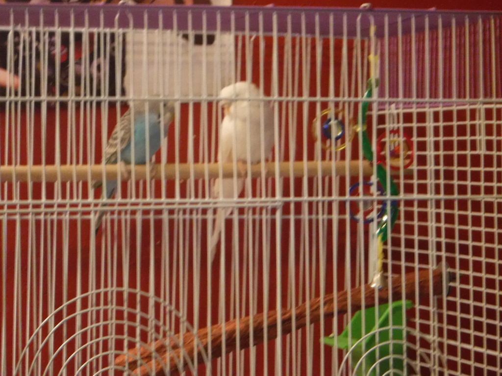 Archimedes (White) and Israphel (Blue)