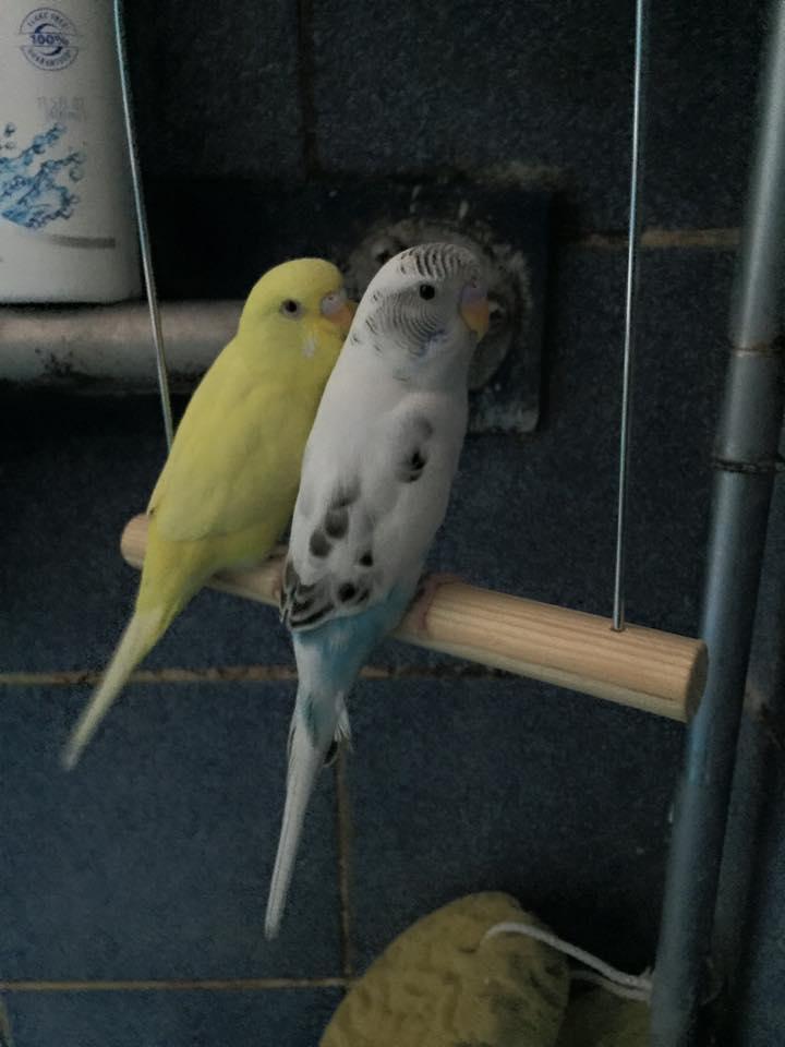 Atarka (yellow) and Ojutai (blue/white)