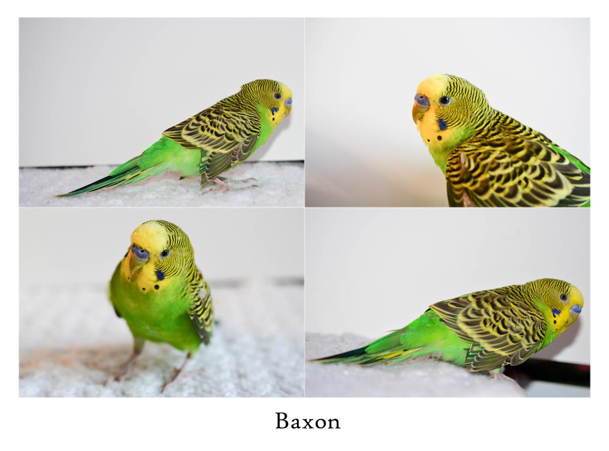 BaxonCollage.jpg