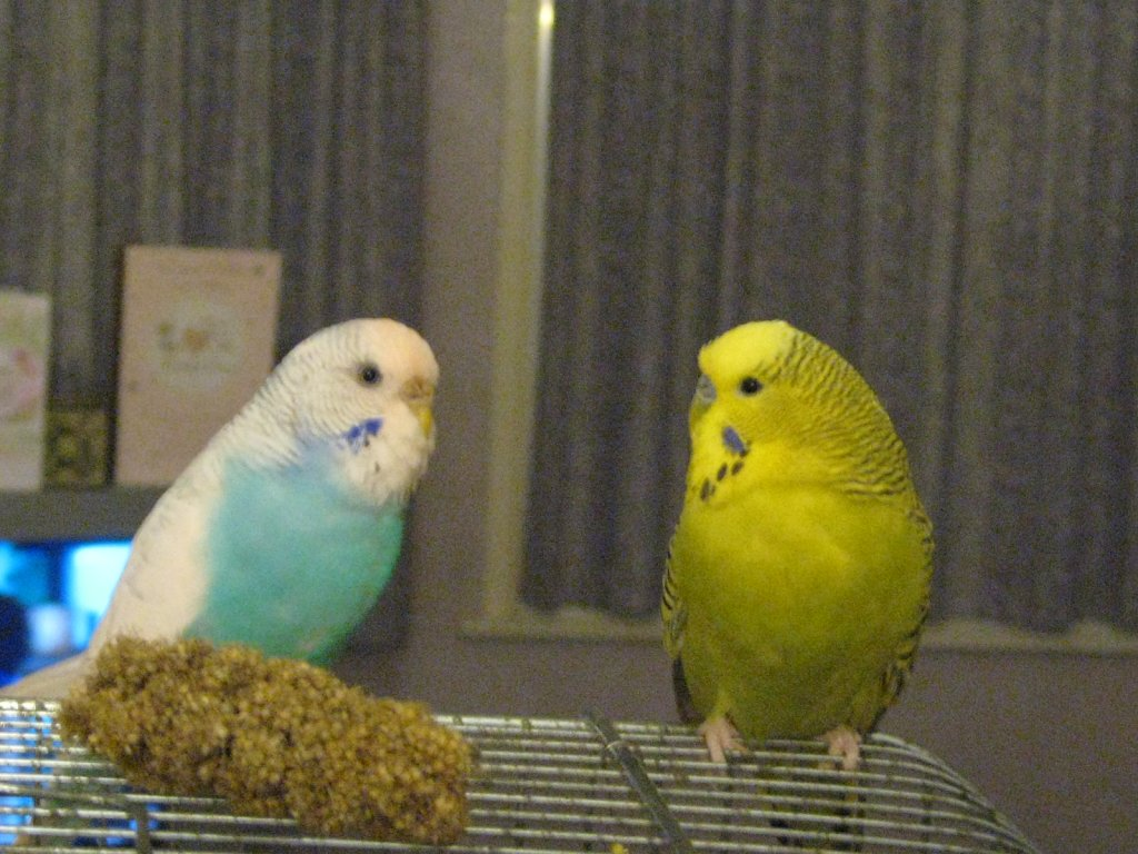 bobby blue and joey yellow