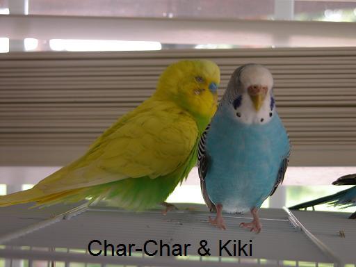 Char-Char and Kiki