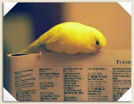Chippy reading