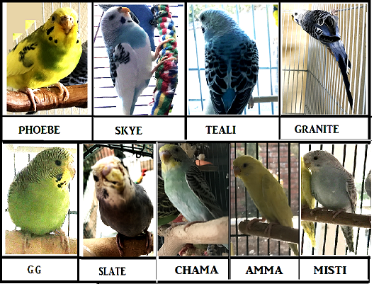 Current birdies