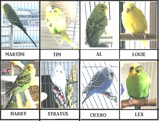 Current birdies