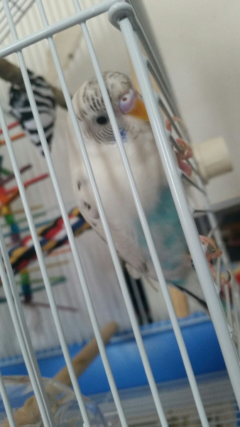 Ezio watching