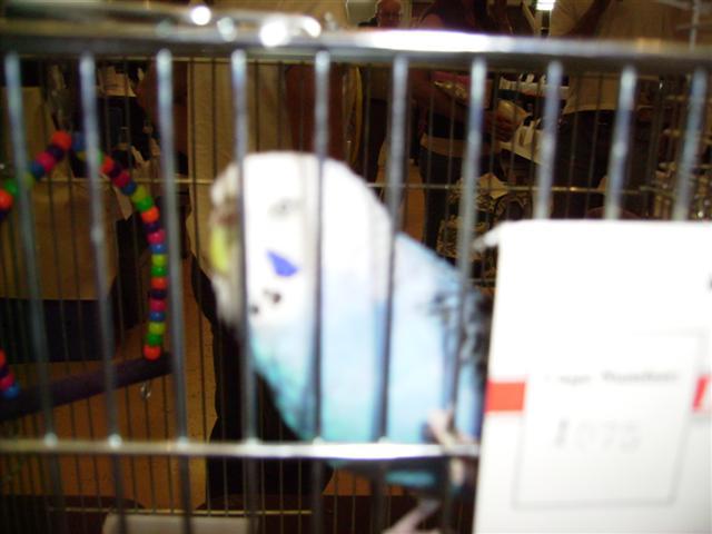 Figaro at Bird Show