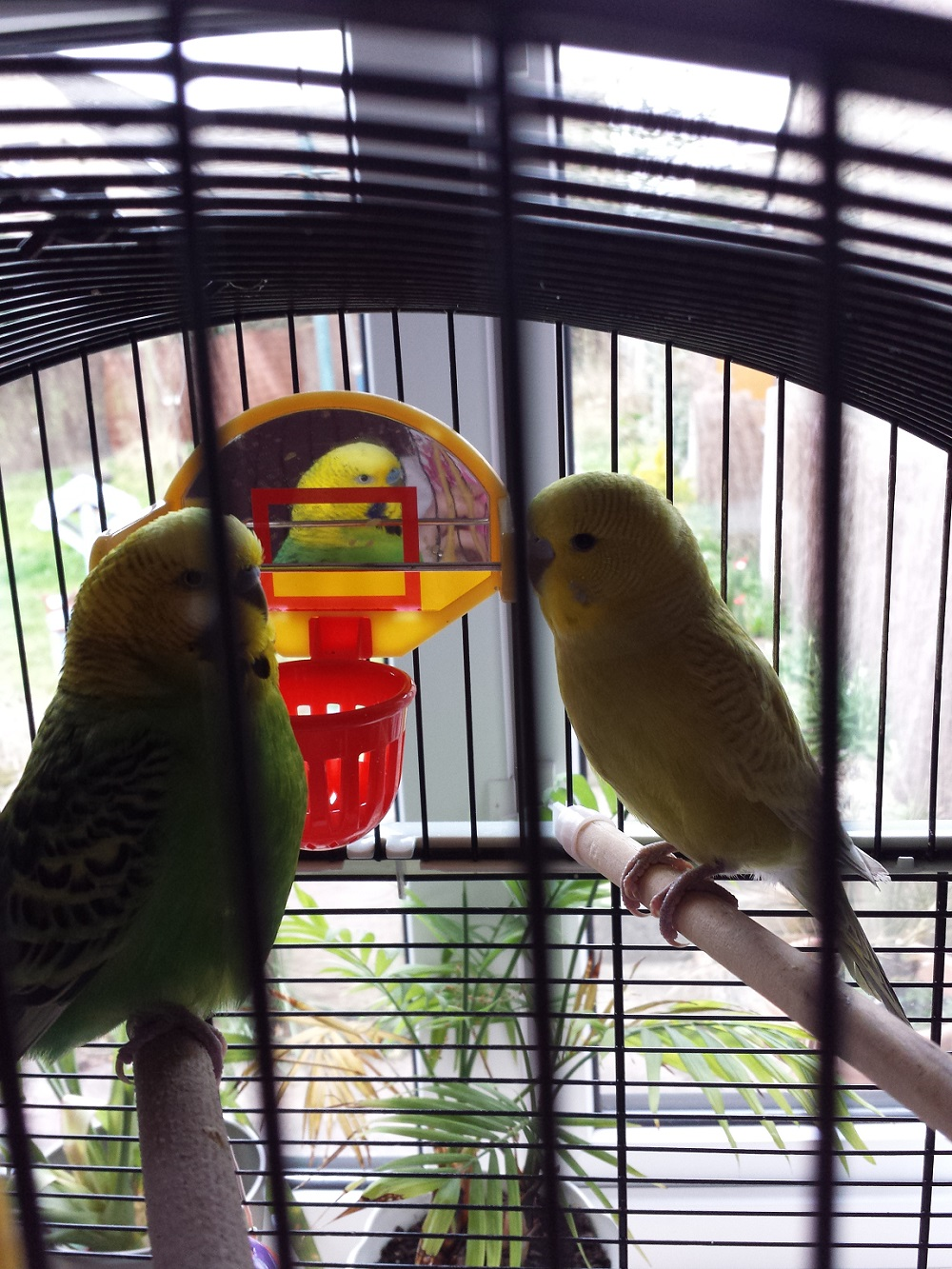 Flappy and Opal