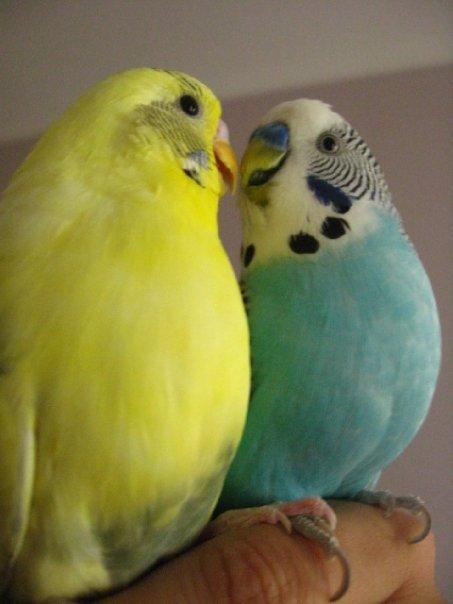 Gary and Edward!