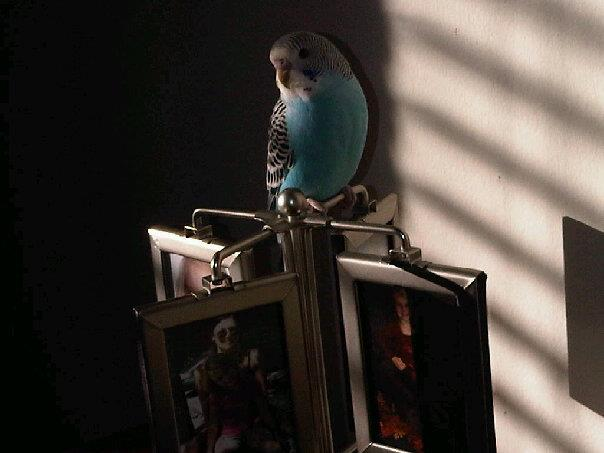 His favorite perch - photo frame of friends & family