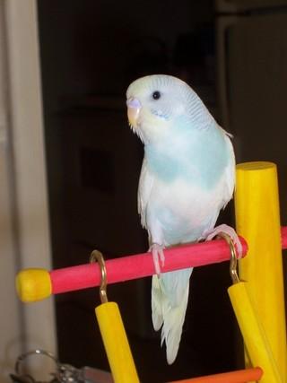 Kiki on her playgym
