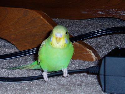 Kiwi on my Nintendo wire