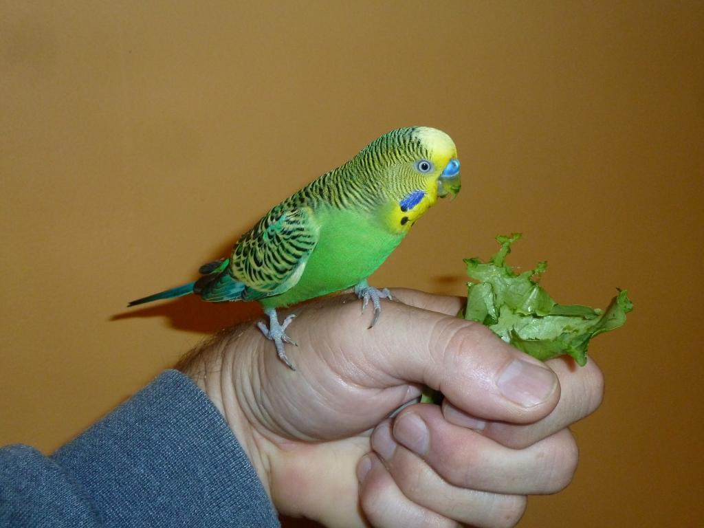 Lindy eating Salad