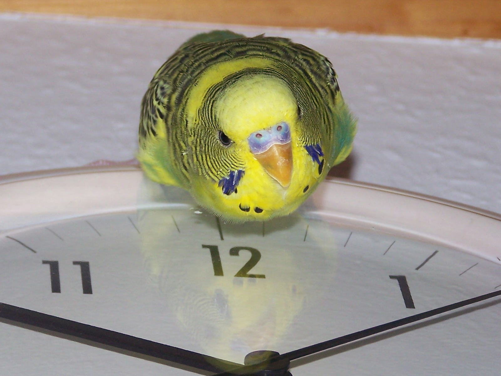 Linux the Timemaster