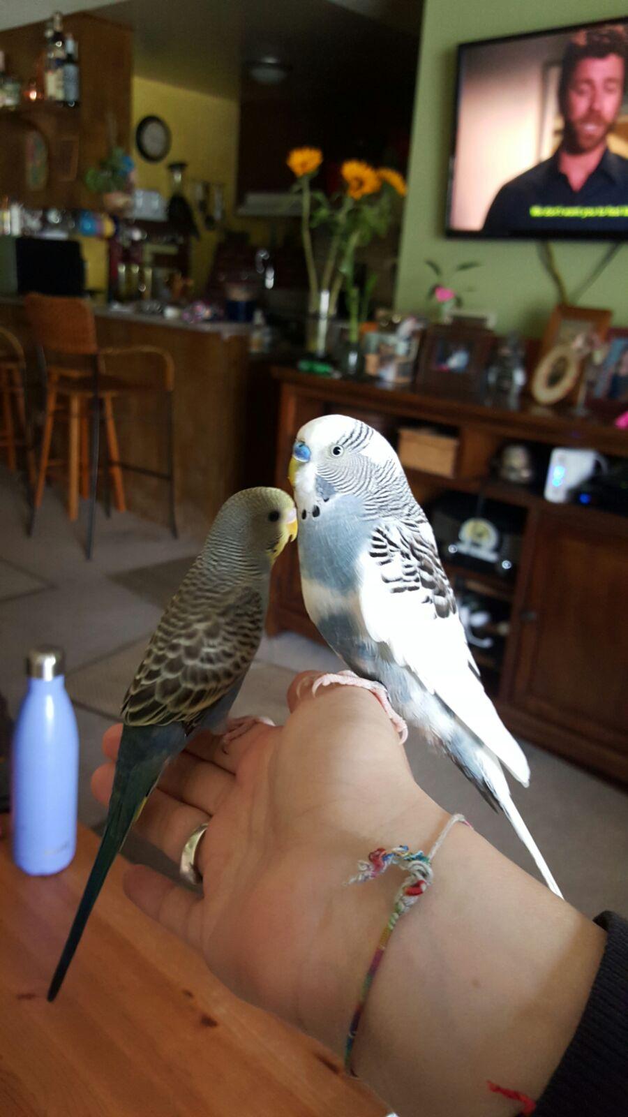 Meet Quinn & Nahlao