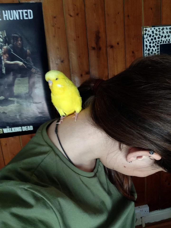 My birdies.
