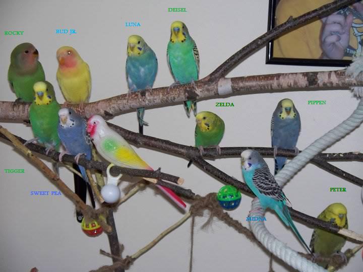 My flock