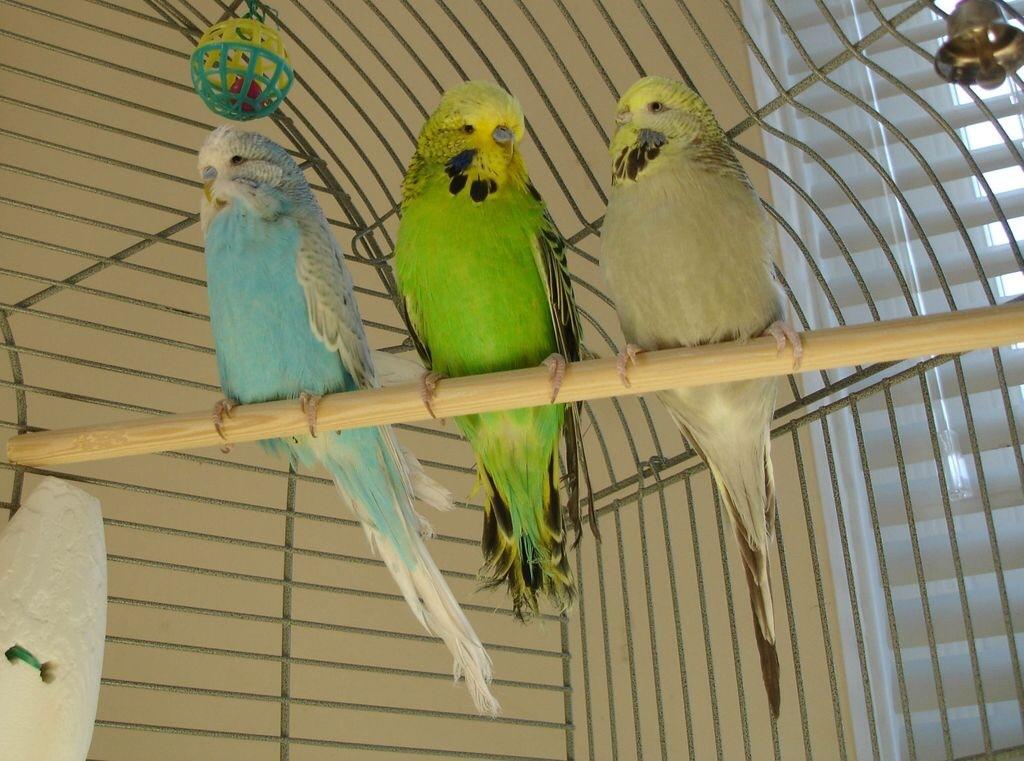 My Gang of Three