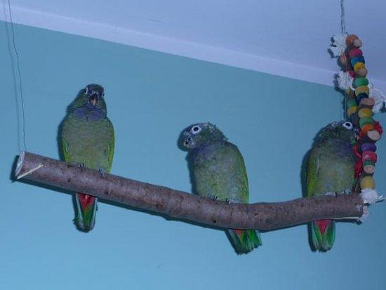 My parrots