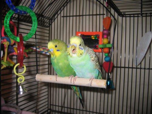 Pippin & Mikko