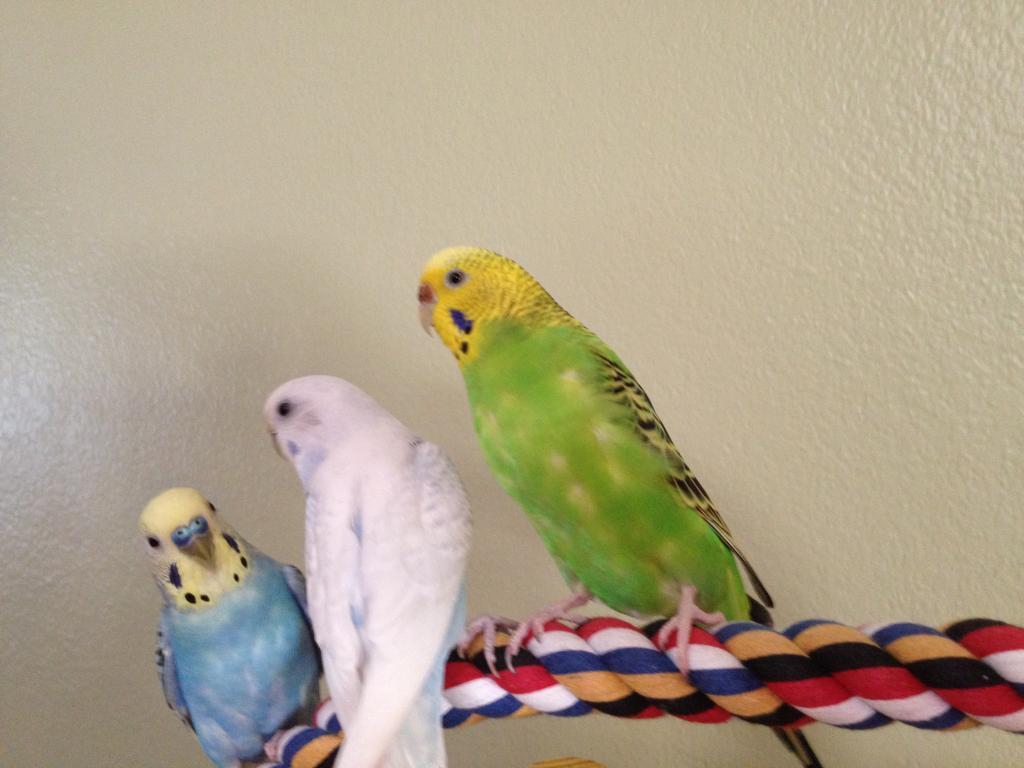 Simon, Snowball and L.B.