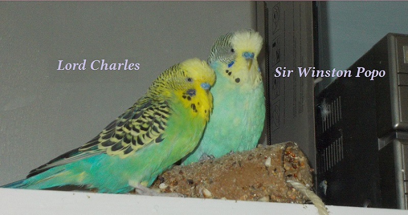 Sir Winston Popo & His majesty Lord Charles