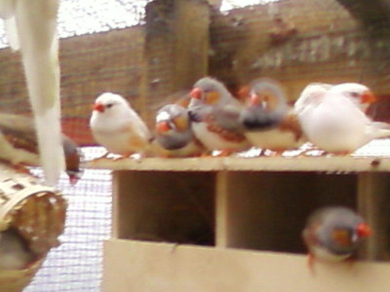 Some of the birds