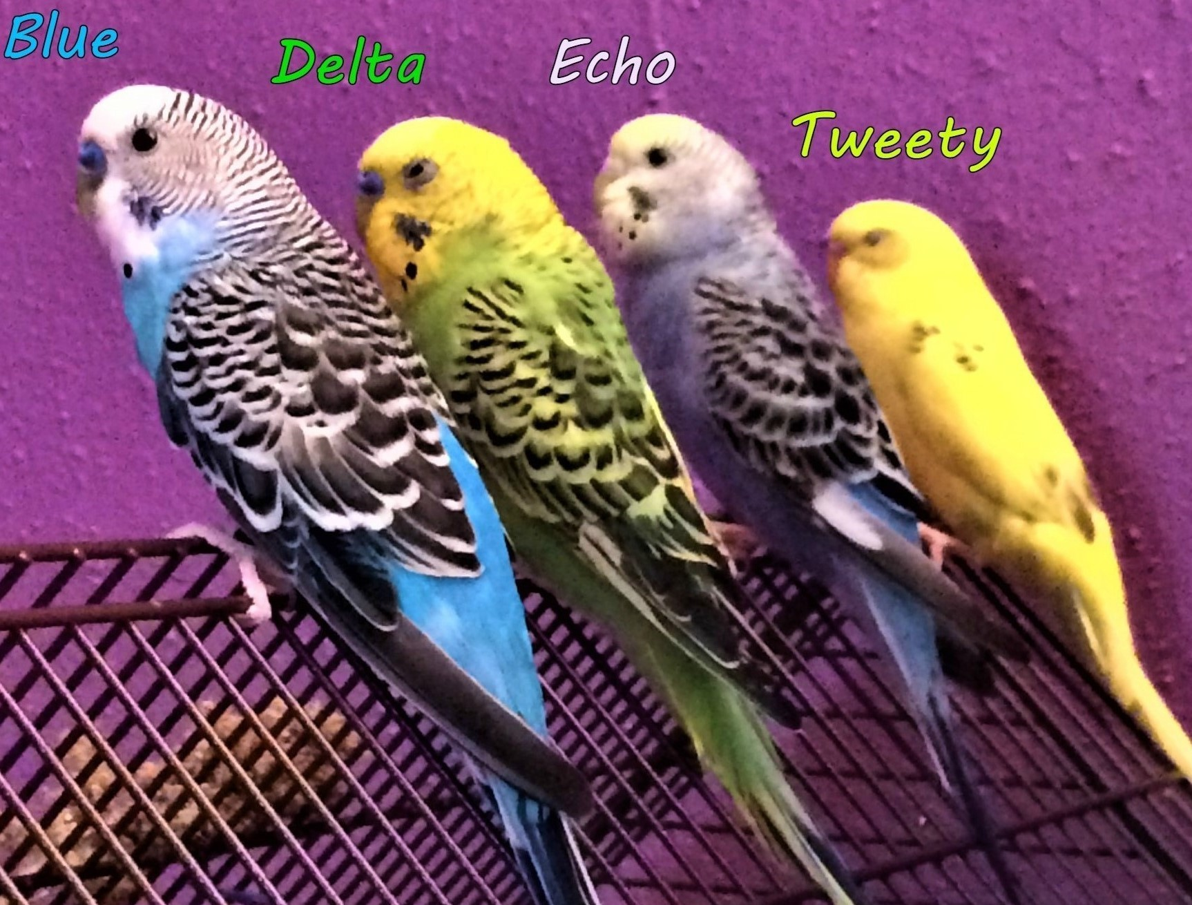 The Budgie Squad.