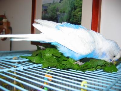 The Love of Celery