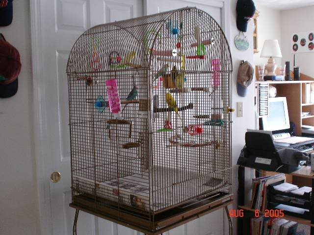 this is the cage my flock of 7 used to live in